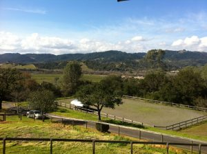 A view across a private horse arena in Blucher Valley Sebastopol